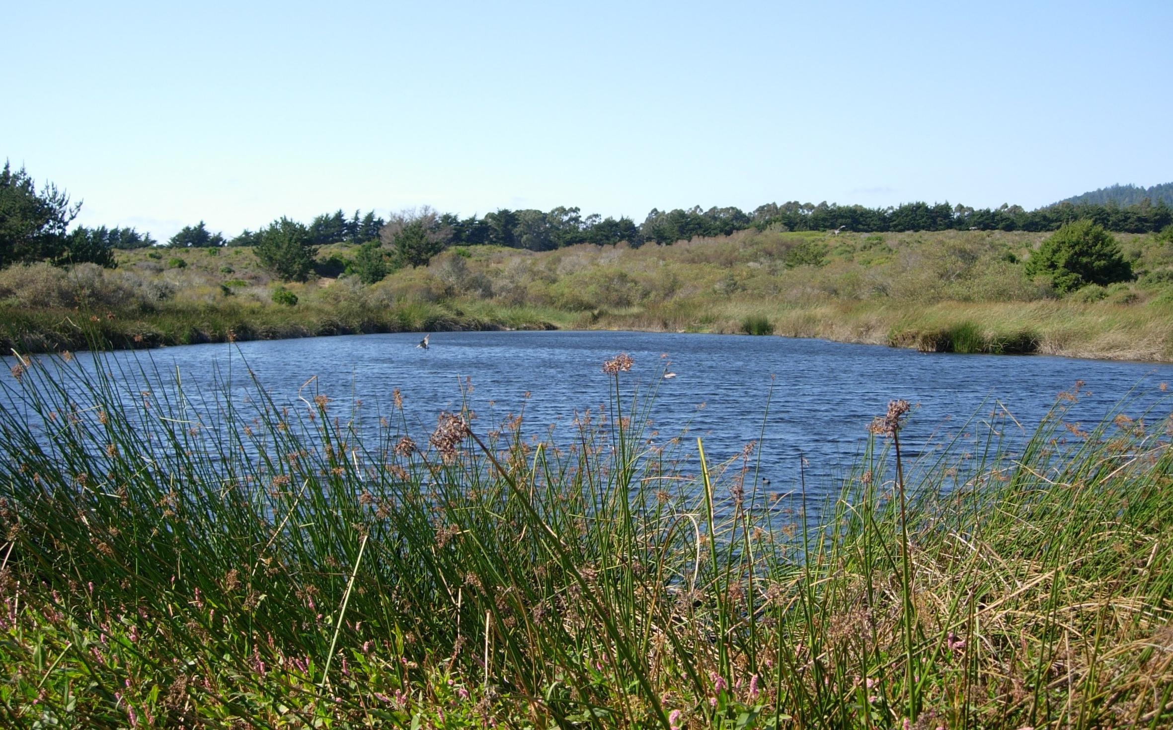 Visitor Center Pond - Año Nuevo